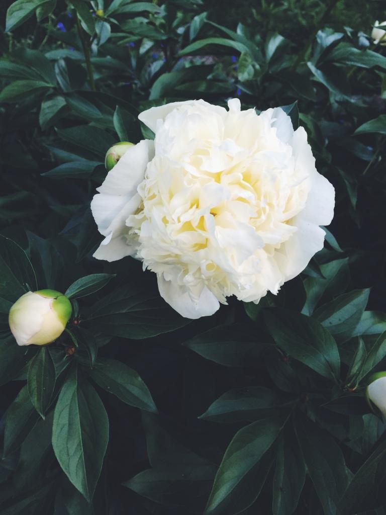 Garden Beanie | Yarn, Things, Etc.
